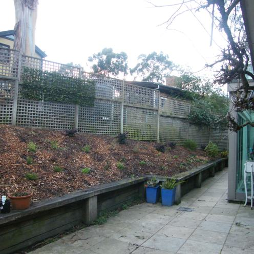 """2013 July - """"The Bank"""" all cleared - let's start planting"""