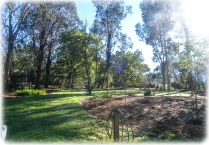 All planted - now for the underplanting