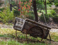 Uccello Lane -Old Cart
