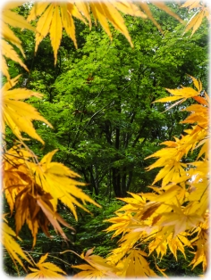 A frame of leaves