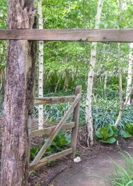 Alowyn Gardens - Gate to the Birch Forest
