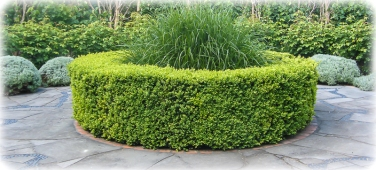 Clipped hedge
