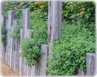 Alowyn Gardens - Fences