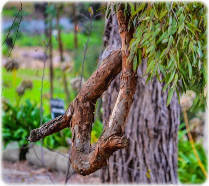 Curly Branch