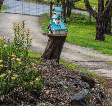 Bird House on Wattle tree stump