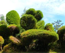 Topiary to look like clouds at Beleura