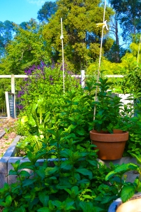 The edible garden has been taken over by mint