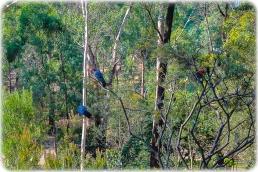 Uccello Lane -Trees