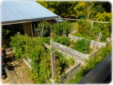 The Edible Garden - Uccello Lane