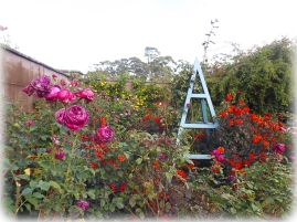 Garden wall with roses