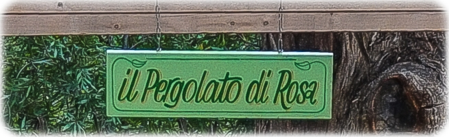 Il Pergolato di Rosa - grapevines will cover this very soon!