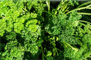 Herb - Parsley