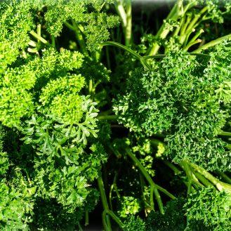 Herb - Parsley