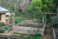 Edibles - Raised Garden Beds