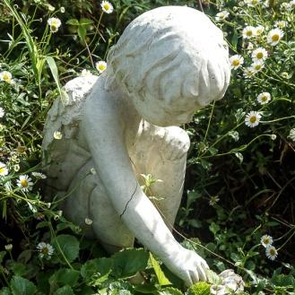 Seaside Daisy & Concrete Angel