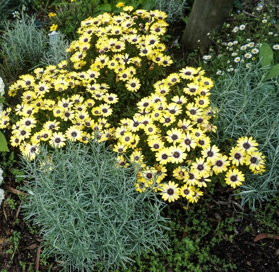 Grey and Yellow Folage