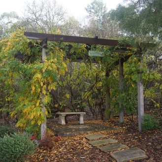Wisteria Colonnade - getting ready for winter
