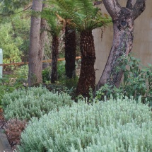 Fernery and Lavender