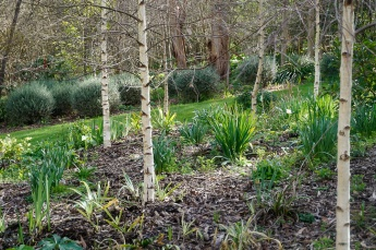 Birch Forest - Underplanting