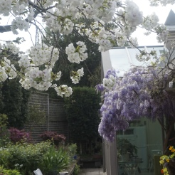 """""""The Bank"""" - Wisteria and Cherry Blossom"""
