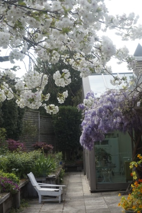 """The Bank"" - Wisteria and Cherry Blossom"