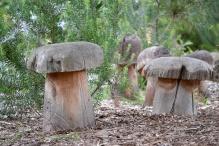 Mushrooms - Garden