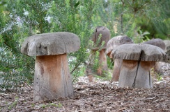 Mushrooms - Garden