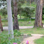 Perennial Garden and trees