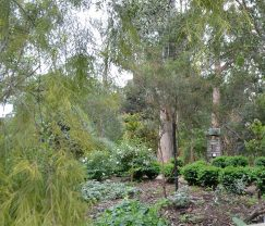 Wattles Bank with hedging near the chook pen