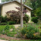 Perennial Garden with the gum and Forest Pansy Tree