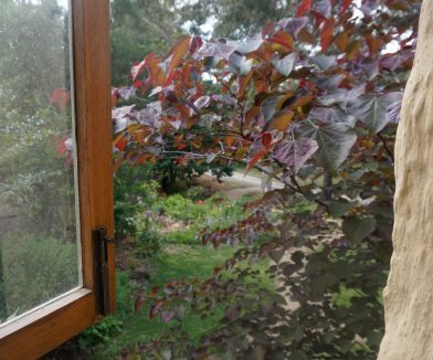 Out the window past the Forest Pansy to the Perennial