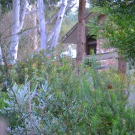 View up to Gum Trees